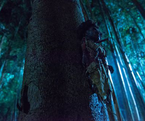 muñeca vudú en un árbol