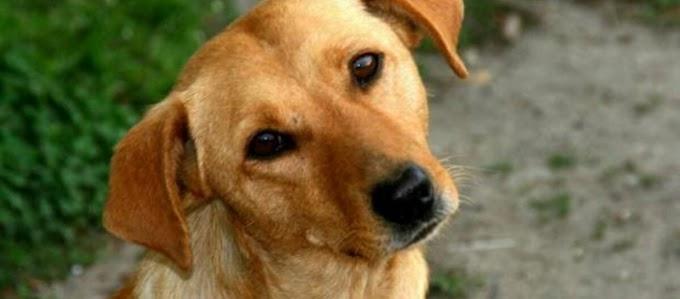 Γιατί τα σκυλιά γυρίζουν το κεφάλι τους στο πλάι, όταν τους μιλάμε;