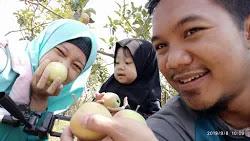 kebun apel batu kusuma agrowisata