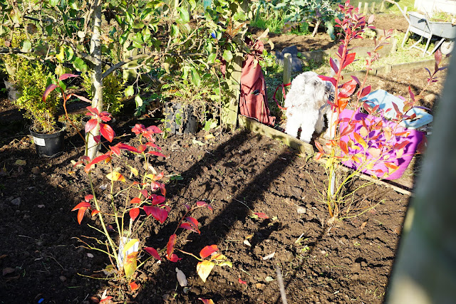 the blueberry bed - A Stubborn Optimist - an ecotherapy blog - C.Gault 2019