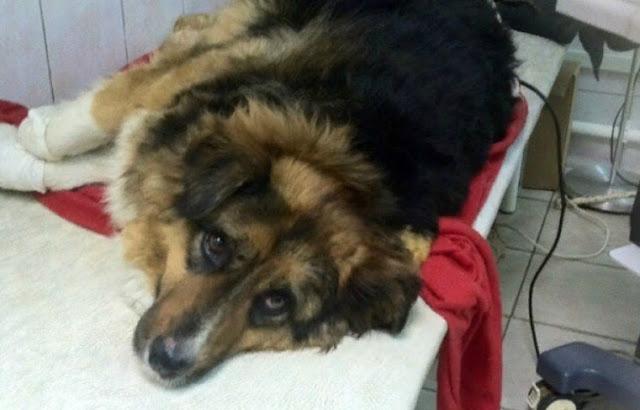 Бездомный пес спас из огня 8 человек, а сам получил сильные ожоги