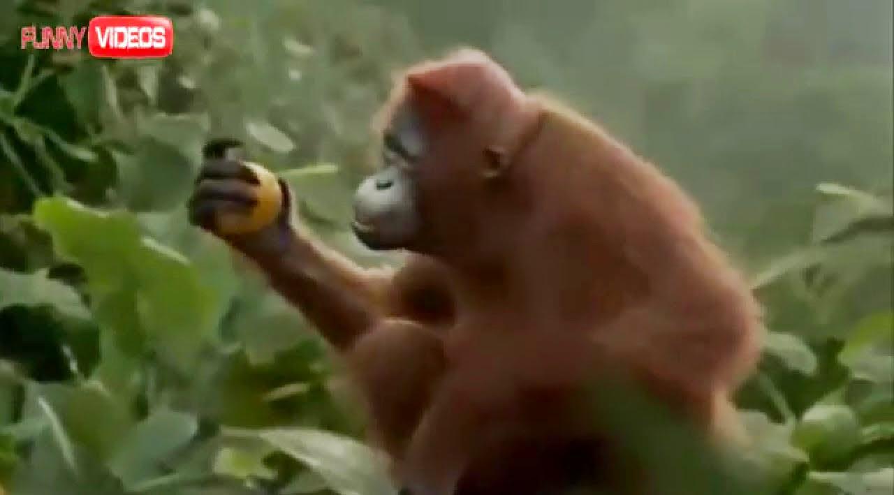 Monyet Dance I Like To Move It Hihih Lucu Abis