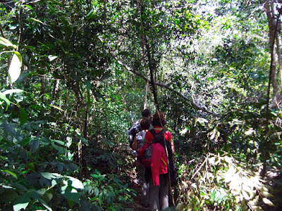 hiking up the hill through the jungle