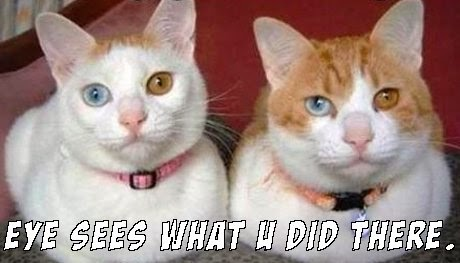 Great Cats Be Funny BLOG