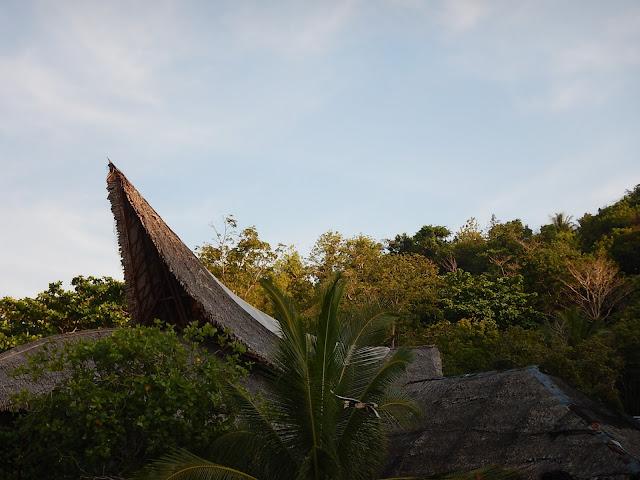 Phuket,hornbills