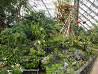 Tropical plants section overview - Kyoto Botanical Gardens Conservatory, Japan