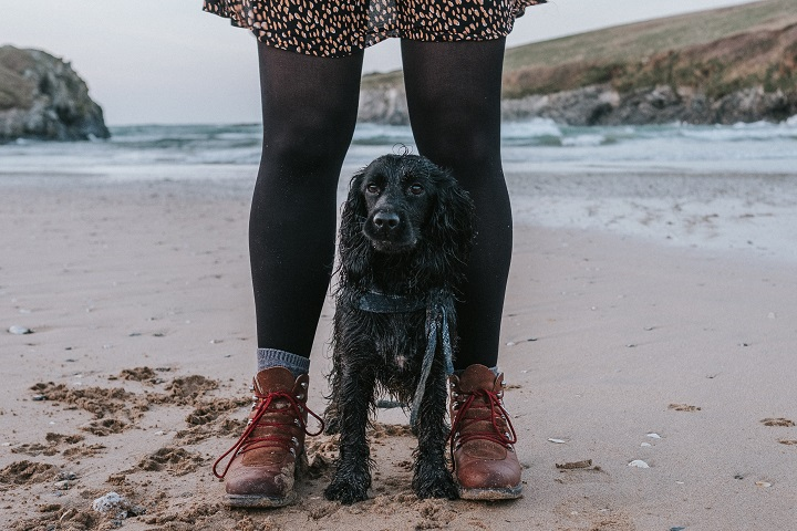 Steph & The Spaniels Best UK Pet Blogs 2019 List