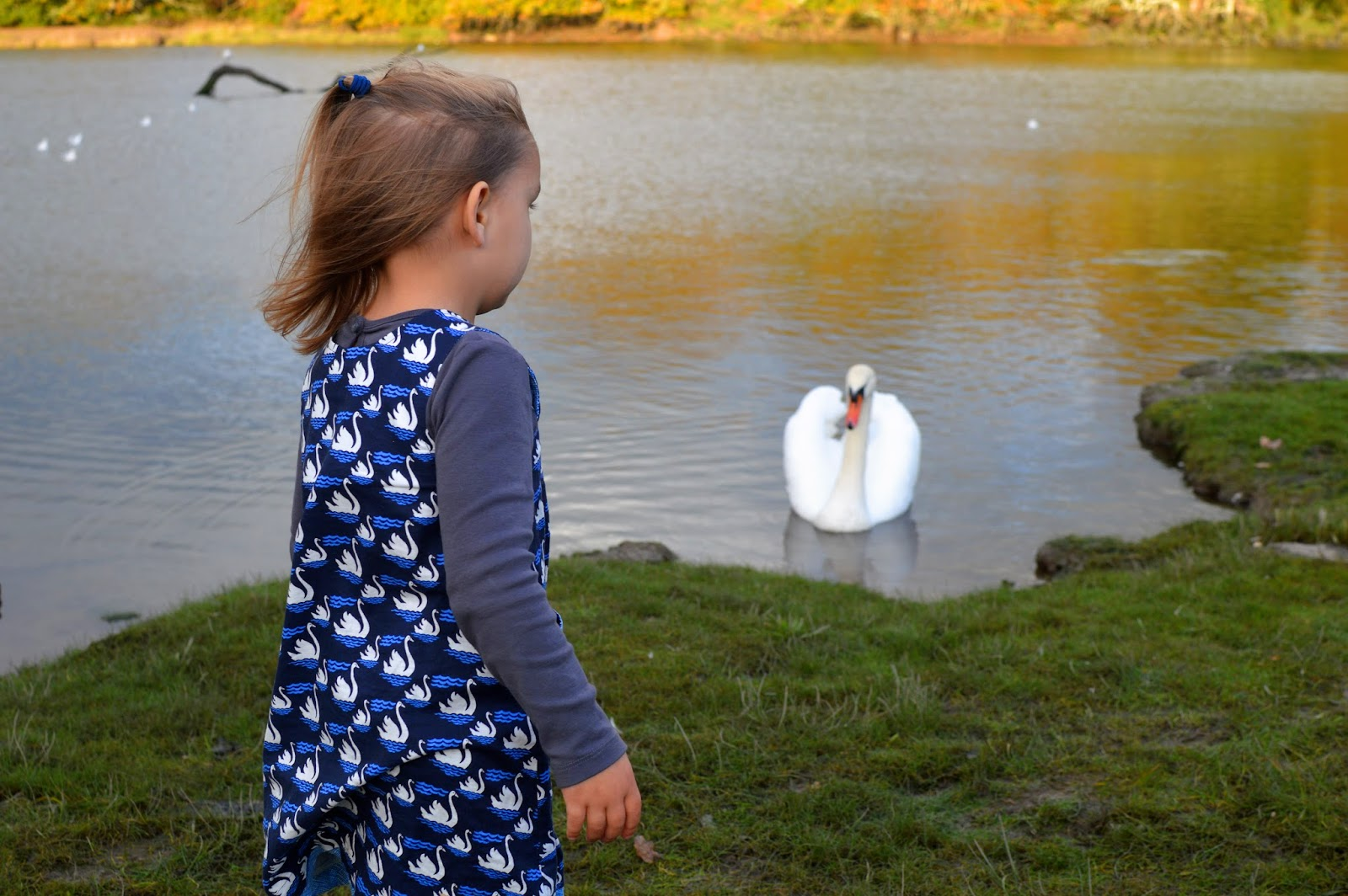 , Feeding the Swans at Westfield Pill,  Neyland Marina