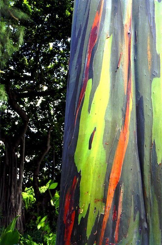 Digital Painting Tree Trunk
