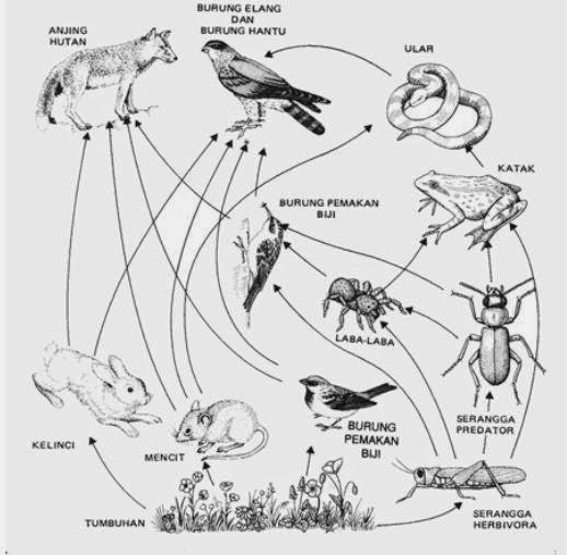 jaring-jaring makanan, pengertian ekosistem, contoh ekosistem, rantai makanan ekosistem.