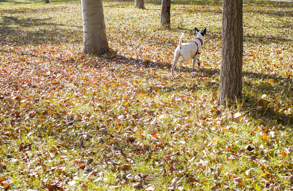 zaragoza otoño fotografía