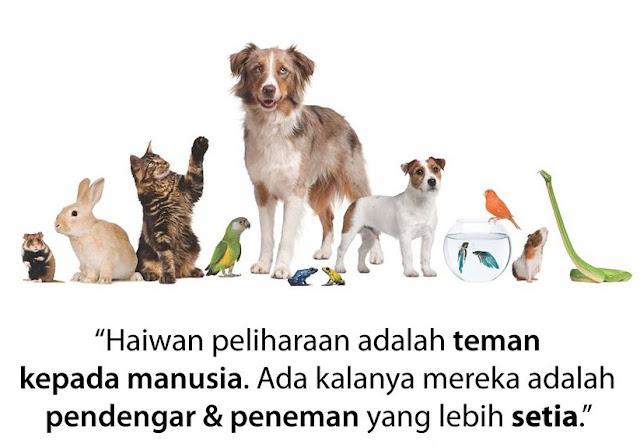 Anda Pencinta Haiwan? Jom Terjah Dogscorner