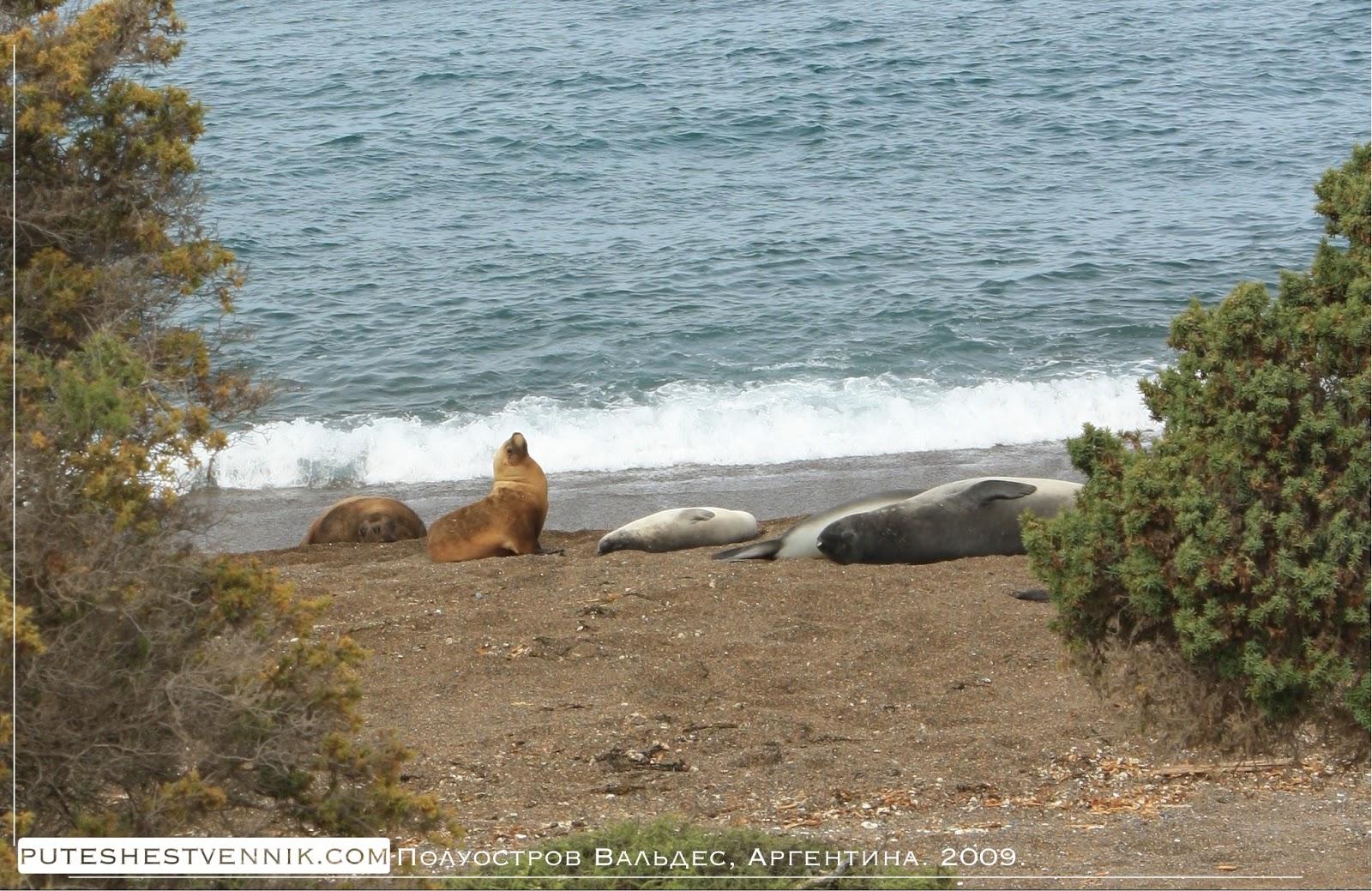 Морские млекопитающие национального парка Полуострова Вальдес