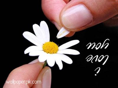 i love you image flower white flower download for love