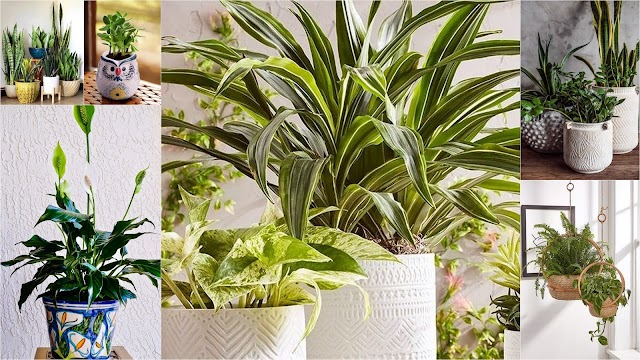 10 Τρόποι - βασικές φροντίδες για να διατηρούνται υγιή τα Φυτά Εσωτερικού Χώρου