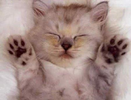 Gatito dormido patas arriba