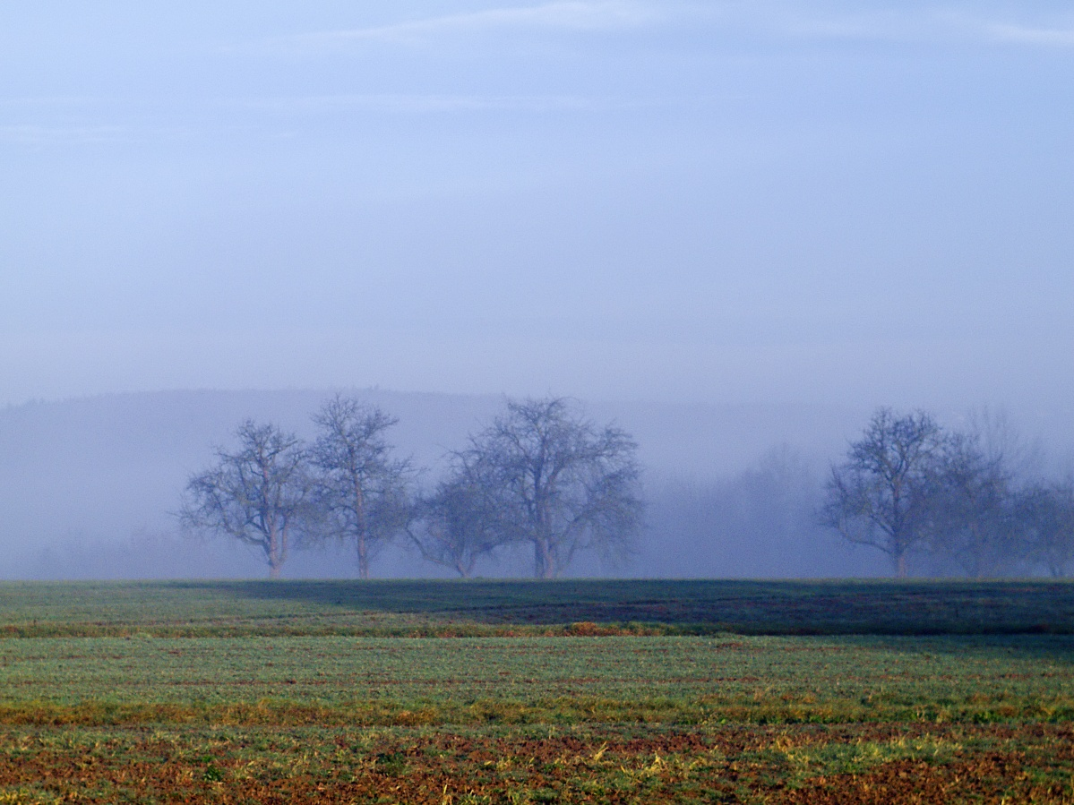 #259 Color-Minotar f2.8 35mm – Neblige Obstbäume