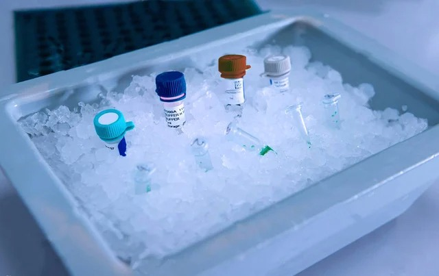 Científicos descubren 33 nuevos virus en los glaciares
