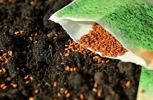 Setiap benih tumbuh baik pada kedalaman tertentu