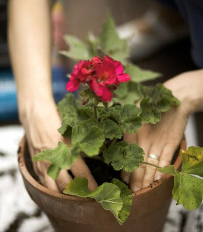 Martin design ita come curare le piante for Curare le piante