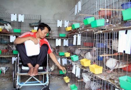 Cách nuôi chim bồ câu nhốt đạt năng suất kinh tế cao