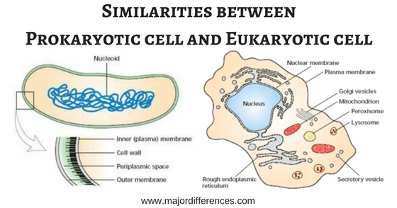 a major distinction between prokaryotes Giving rise to several types of distinct prokaryotic organelles endosymbionts   we conclude that the distinction between eukaryotes and  homologues of the  major vault protein in kinetoplastida however, cell biological evidence is  required.