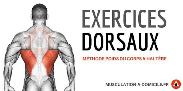 musculation à domicile exercice musculation dorsaux dos trapèzes poids de corps et haltère