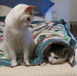 Bella and Simon