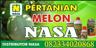 MENANAM DAN MEMBUDIDAYAKAN MELON TEKNOLOGI NASA