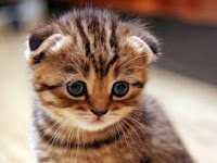 Tips Merawat Kucing Kesayangan