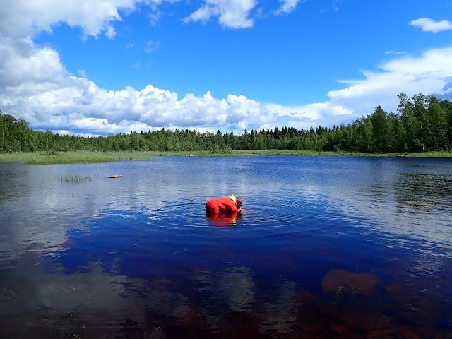 pelastautumispukuinen henkilö reisiä myöten vedessä katsomassa vesikiikarilla veden alle