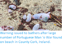 https://sciencythoughts.blogspot.com/2019/09/warning-issued-to-bathers-after-large.html