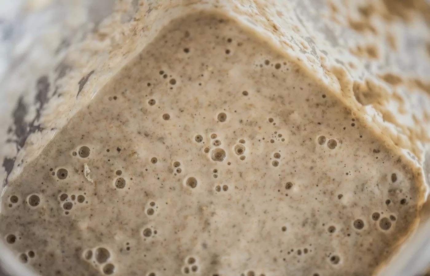 sourdough starter for Amish bread