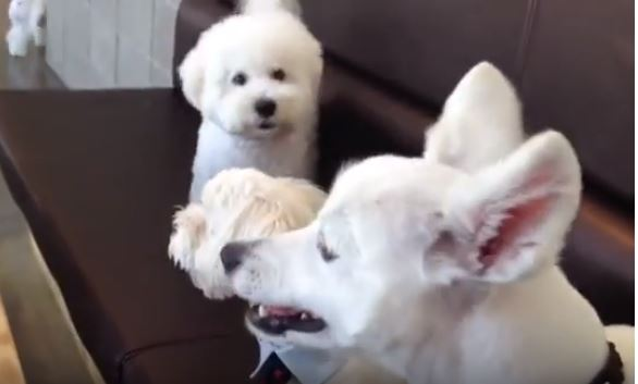 Adorable Dog Came to the Rescue When His Two Other Friends Were Fighting