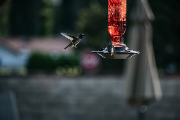 Simple tips about birds