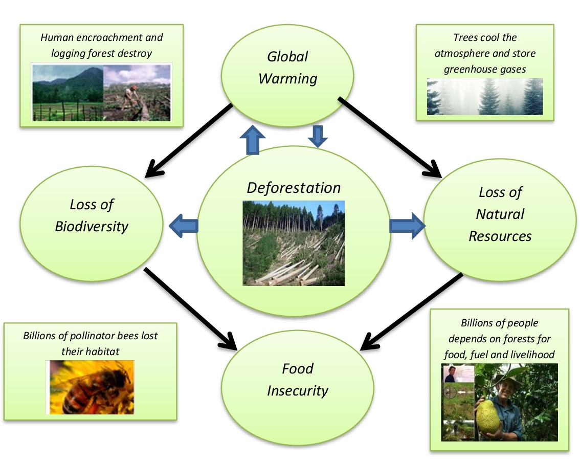 Lesson Plan Of Deforestation And Our Environmen General