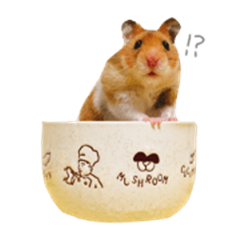 Golden Hamster Guri