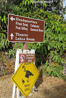Nene crossing warning sign – Hawaii Volcanoes National Park, Big Island – © Denise Motard
