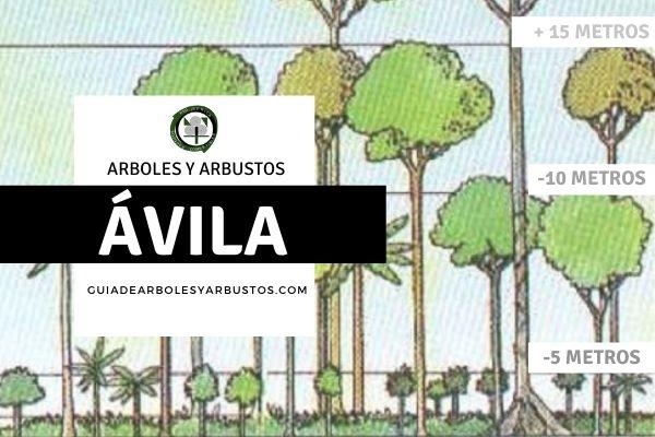 Arboles y arbustos de la provincia de Avila, España, por estratos