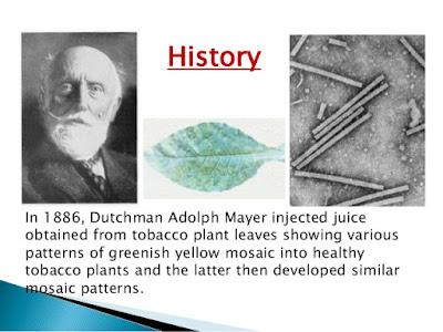 Tobacco mozaik virus