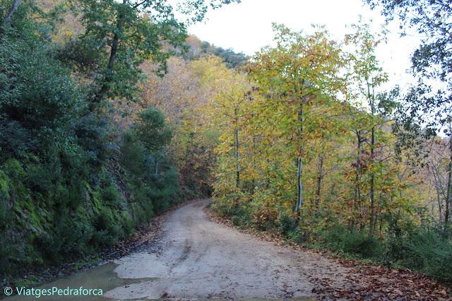 Colors de tardor, fagedes, arbres caducifolis, natura, senderisme, Catalunya