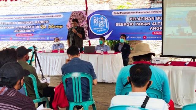 Legislator PDI Perjuangan Ajak Pembudidaya Ikan Kembangkan Maggot Sebagai Pakan Alternatif