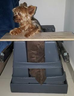 cadeira cães de pequeno porte