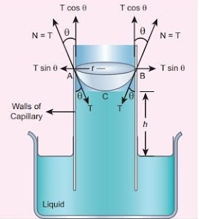 The concept of capillary action and it's ascent Derivations//