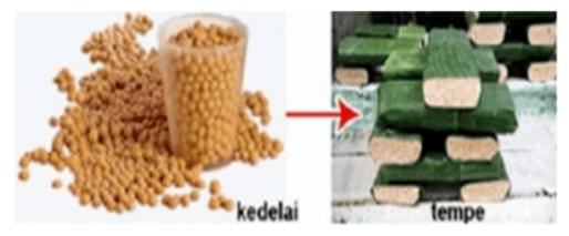Gambar berikut menunjukan proses pembuatan makanan yang berasal dari kedelai. Jenis jamur yang digunakan pada proses tersebut adalah?