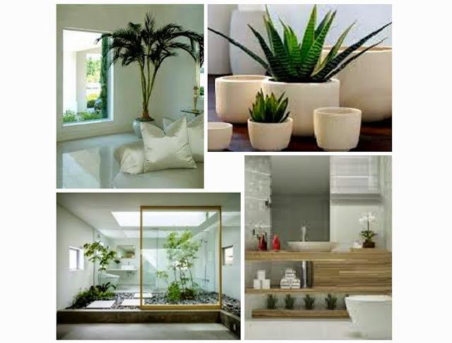 Poracasa plantas interiores - Plantas interiores ...