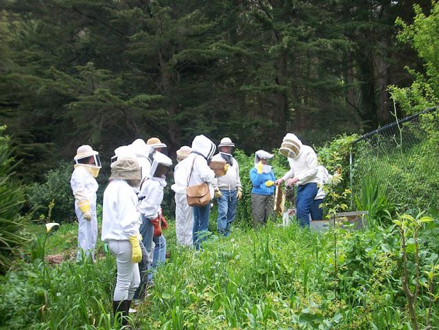 Σύλλογος Μελισσοκόμων του Σαν Φρανσίσκο: Ελάτε να μάθουμε πως λειτουργούν οι Σύλλογοι στο εξωτερικό