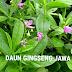 DAUN GINGSENG JAWA