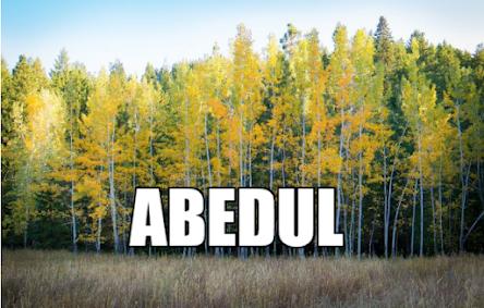 Propiedades curativas del Abedul (Betula verrucosa)