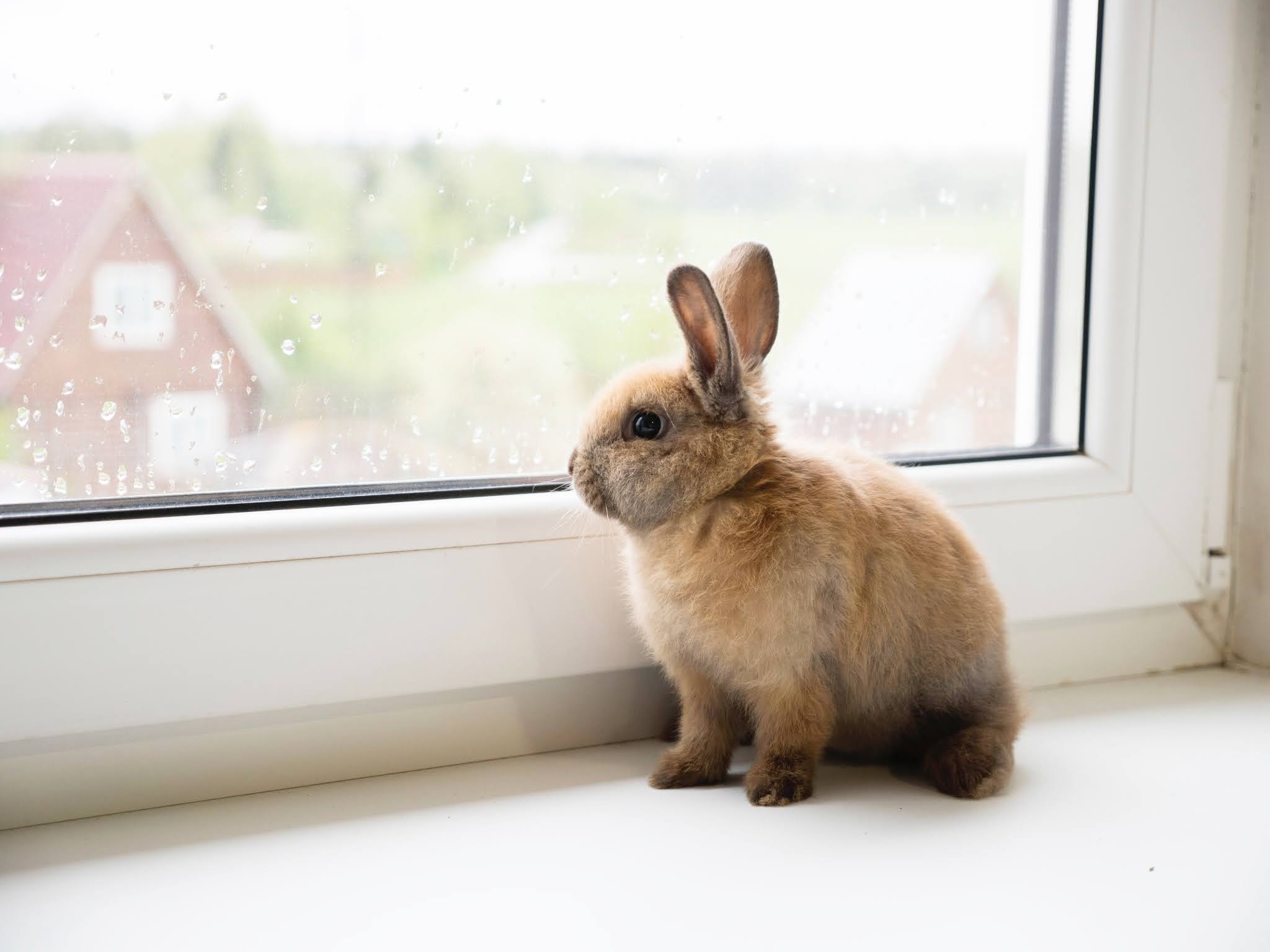 8 ciekawostek o królikach o których mogłaś nie wiedzieć